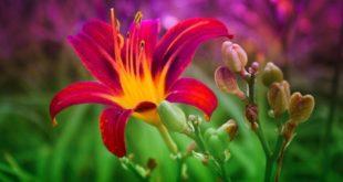 A flor me observava atentamente, por TADANY